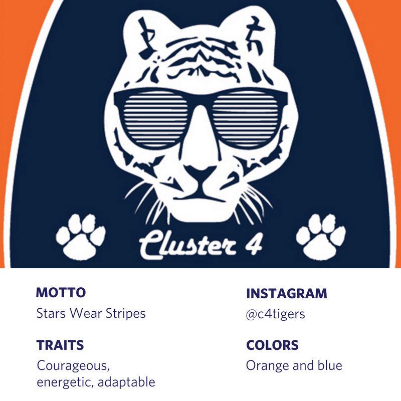 Cluster 4