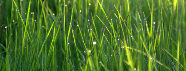 Close up of dewy green grass